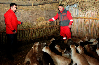 Hajibadalli quartet sets up sheep farming co-op in Azerbaijan